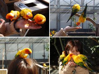 掛川花鳥園04