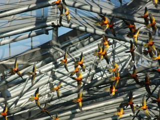 掛川花鳥園14
