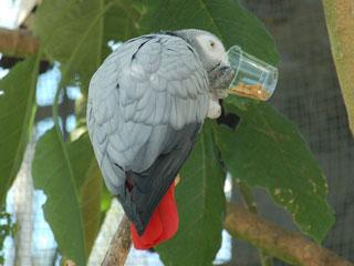 掛川花鳥園16