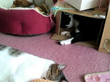 枕に頭乗せた猫の後ろに