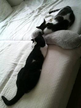 枕をはんぶんこ1