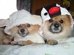 羊とペンギン