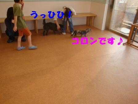 dansi8.jpg
