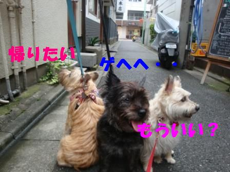 jyosi4.jpg