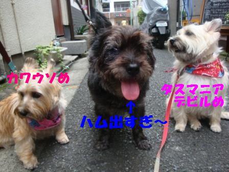 jyosi9.jpg