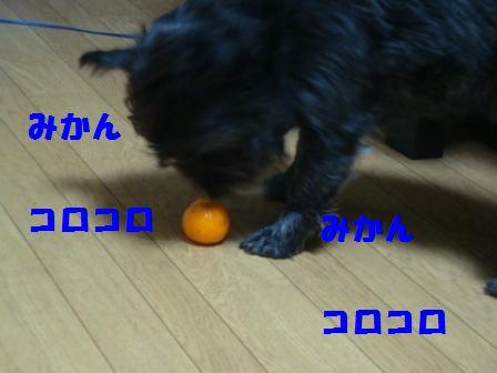 niku3.jpg