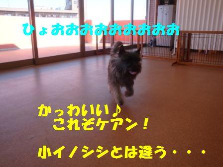 niku6.jpg