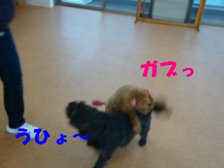 sakari7.jpg