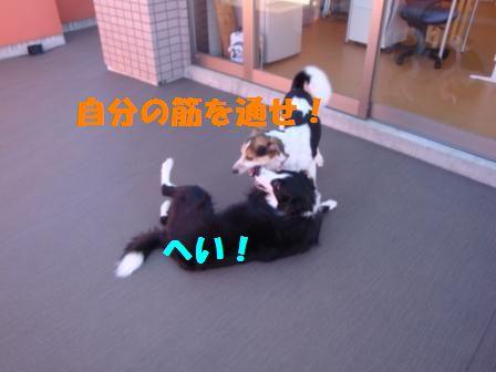 sumou3.jpg
