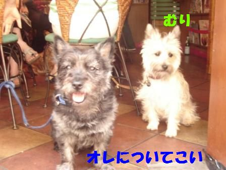 yasuko1.jpg
