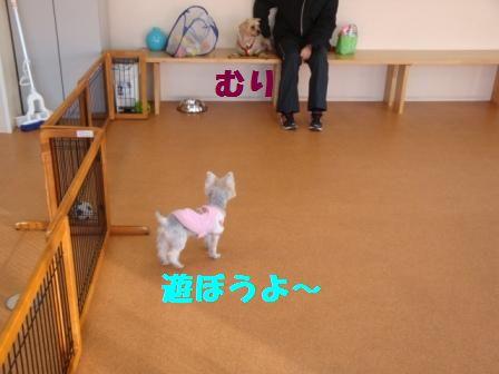 yasuko4.jpg
