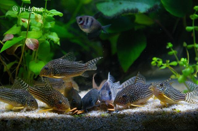 熱帯魚090831_1