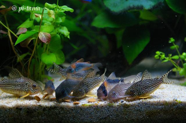 熱帯魚090831_2