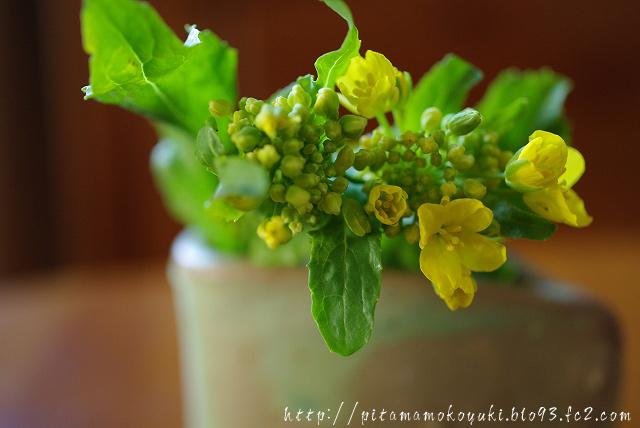 菜の花100322_1