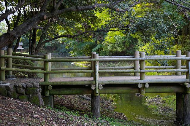 公園の橋091010_1