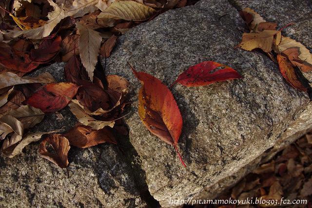 石の上の落ち葉101128_1