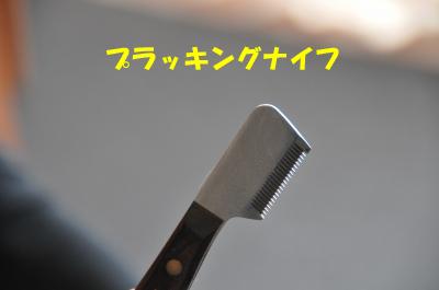 DSC_2605_convert_20090419210742のコピー