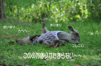 DSC_3005_convert_20090502222815のコピー