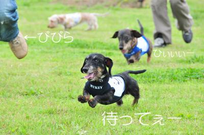 DSC_5971のコピー