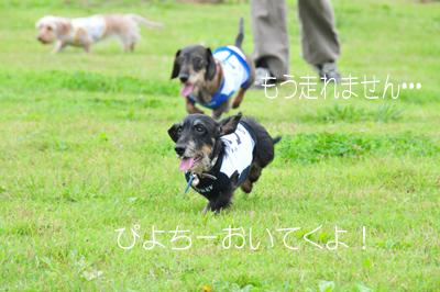 DSC_5970のコピー