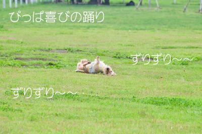 DSC_5989のコピー