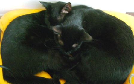 ジル&キティ