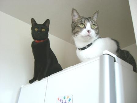 キティ&蓮
