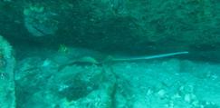 タイ|タオ島|ダイビング