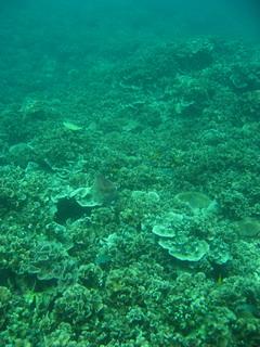タイ|タオ島|ダイビング|オープンウォーターコース