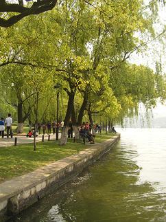 湖の周りには枝垂れ柳が沢山