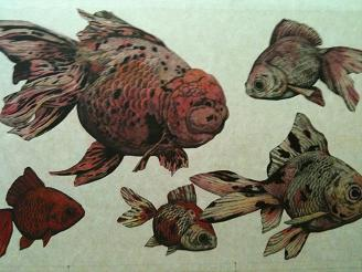金魚貼り込み1