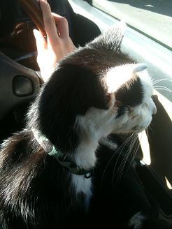 獣医さんの帰り、車の中でゲージから脱走「早くお家に帰るにゃ~」