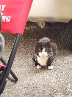 近所の野良猫も被災者だ。お魚の皮をあげた