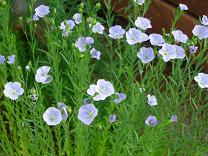gardening004.jpg