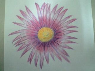 2色咲きスプレー菊