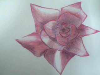 色鉛筆画 バラ