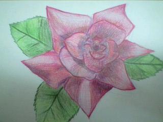 色鉛筆画 バラ2