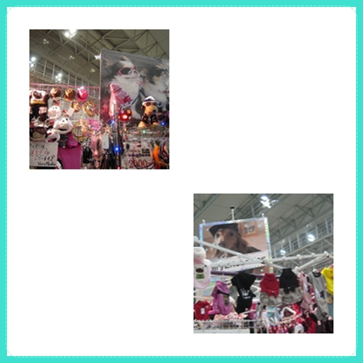 pethaku2_20110112223637.jpg