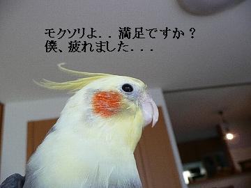 ハミ毛10