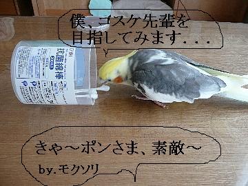 綿棒遊び11
