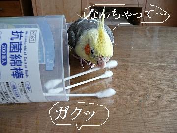 綿棒遊び13