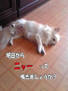 猫になった犬