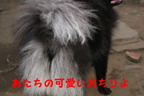 DSC00252.jpg