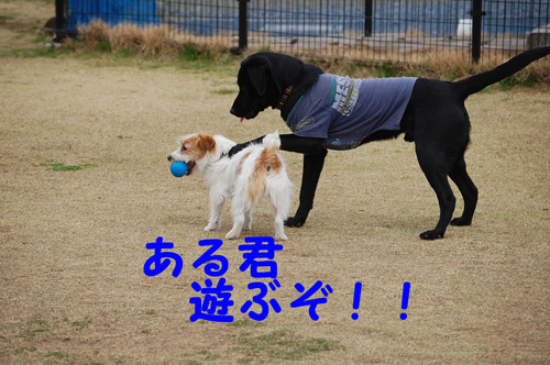 DSC_0019_20090404212112.jpg