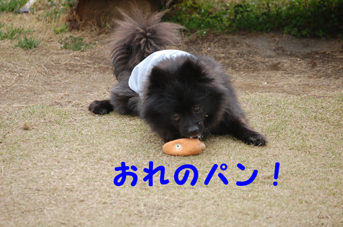 DSC_0025_20090404212159.jpg