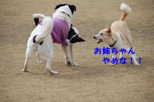DSC_0051_20090331175207.jpg