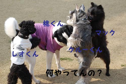 DSC_0060_20090331175242.jpg