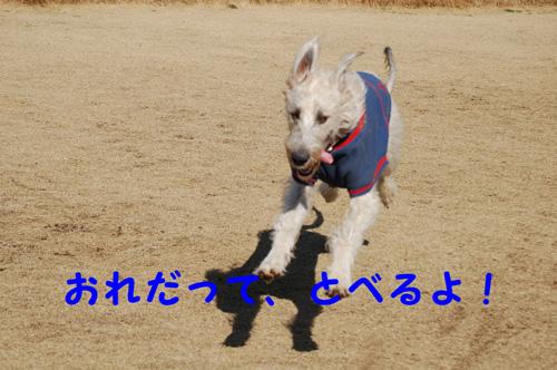 DSC_00760001.jpg