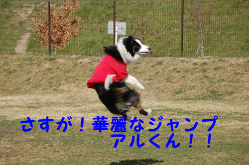 DSC_00950007.jpg