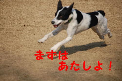 DSC_01740009.jpg